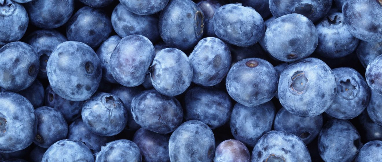 BVB Substrates blueberries