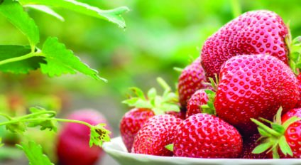 Strawberry fruits in bowl