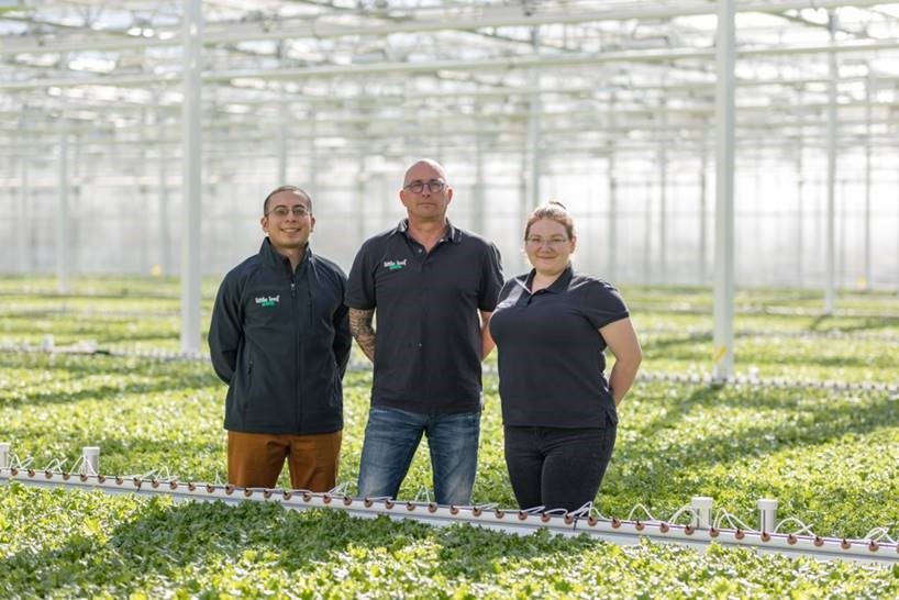 Reference story lettuce grower