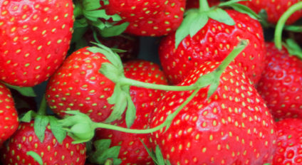 Interview strawberry grower open soil